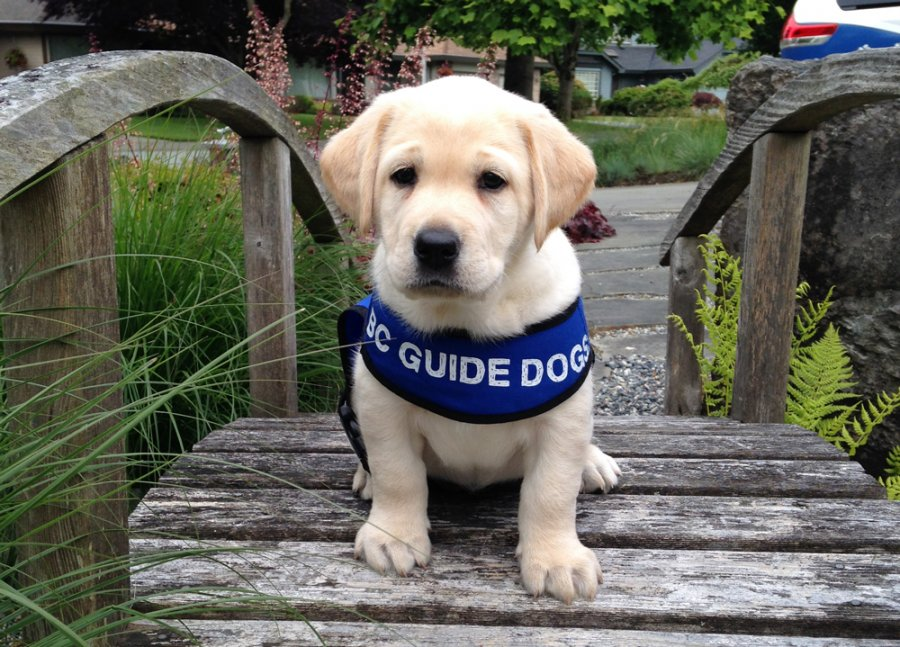 Walk For Guide Dogs Alberni Ca