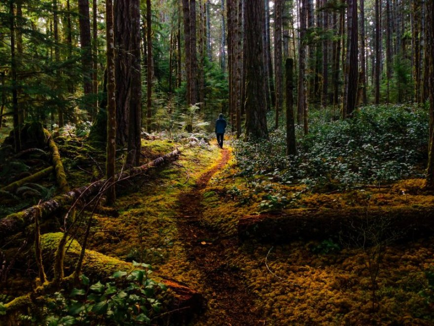 Hiker in mossy forest